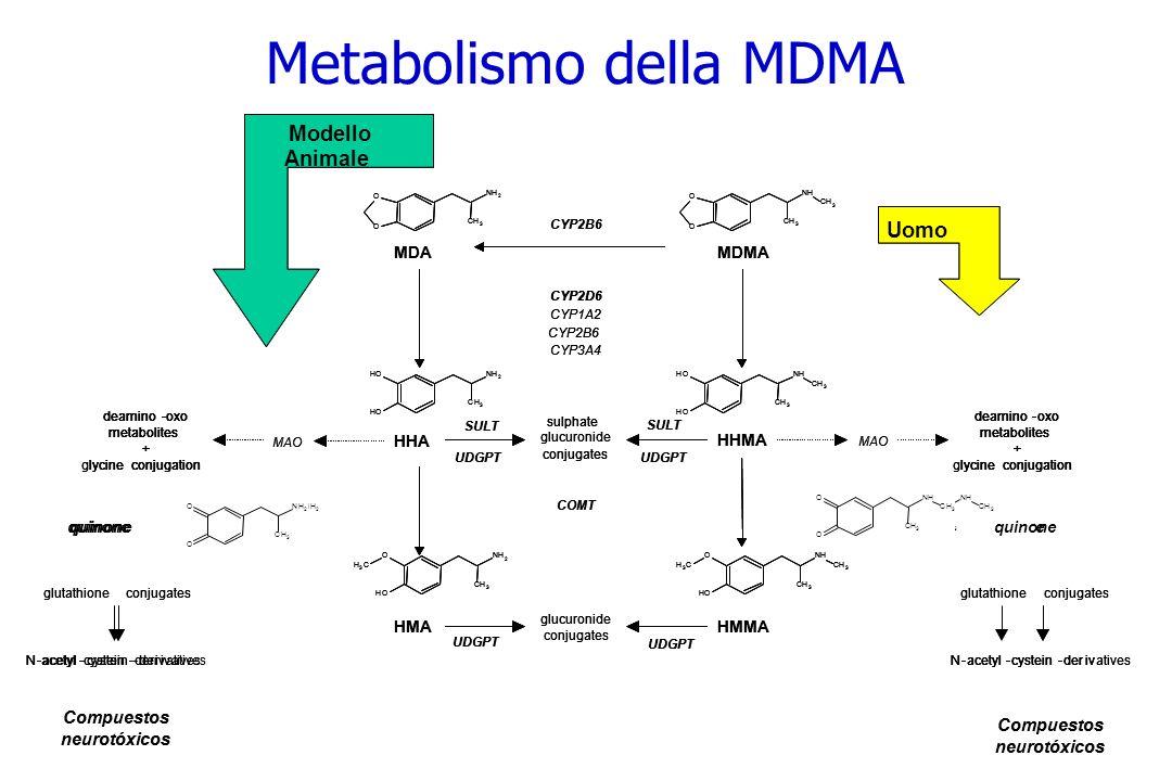 Metabolismo della MDMA