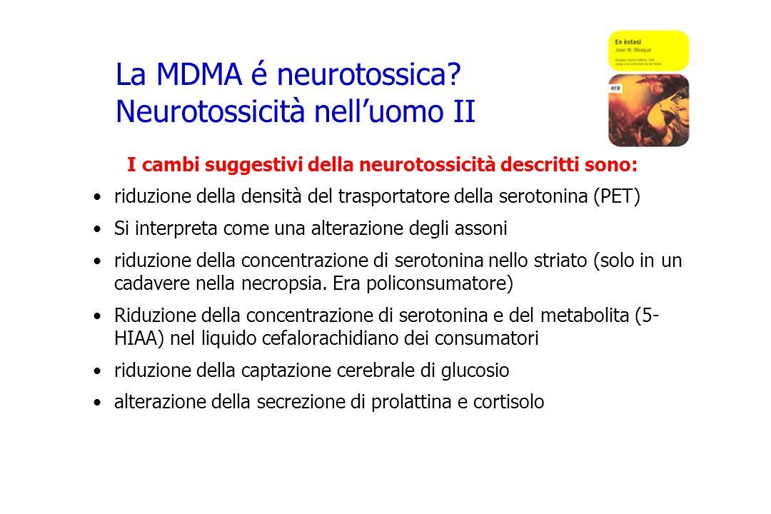 La MDMA é neurotossica Neurotossicità nell'uomo II