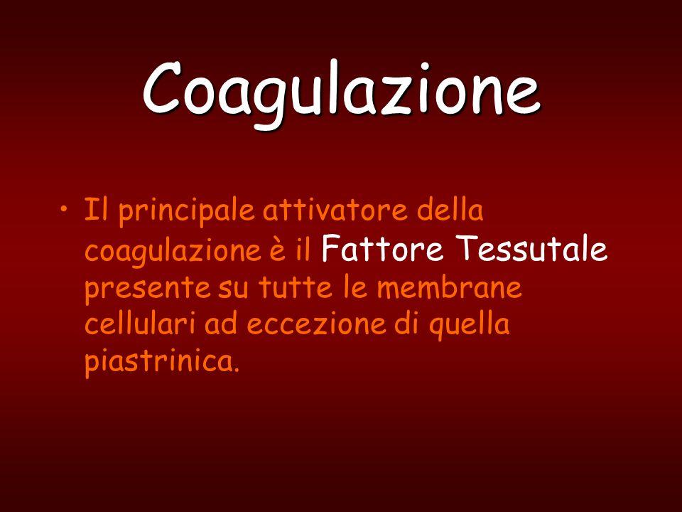Coagulazione