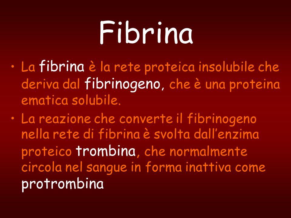 FibrinaLa fibrina è la rete proteica insolubile che deriva dal fibrinogeno, che è una proteina ematica solubile.