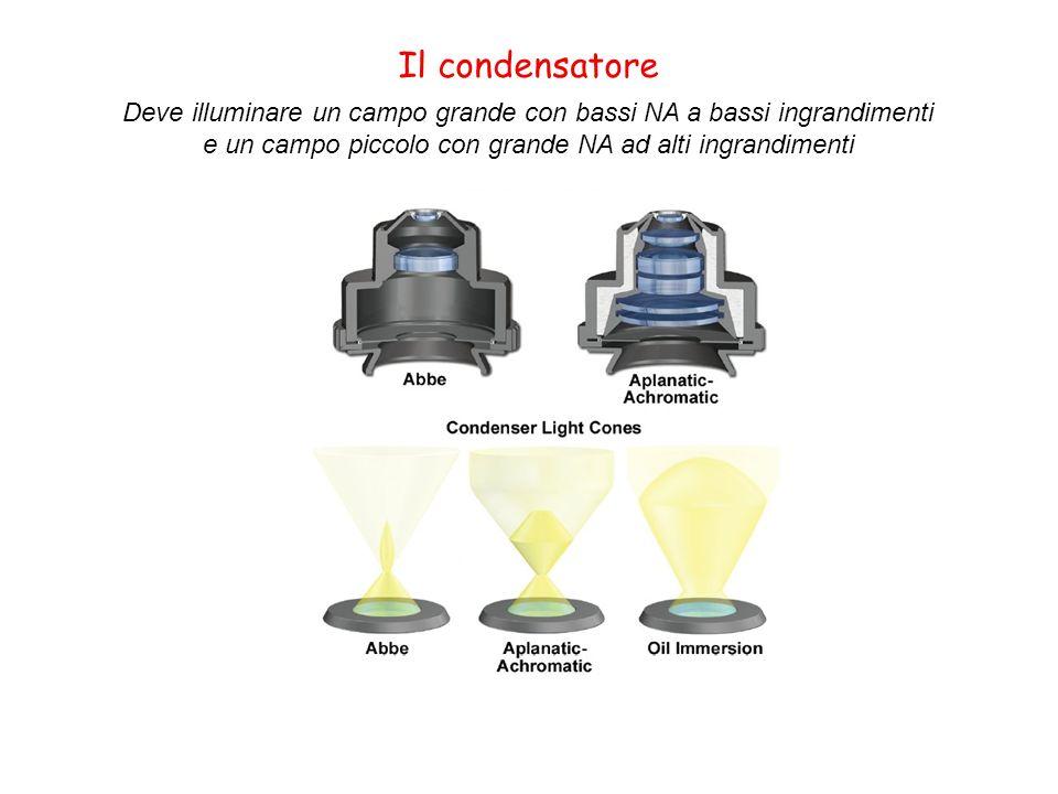 Il condensatore Deve illuminare un campo grande con bassi NA a bassi ingrandimenti.