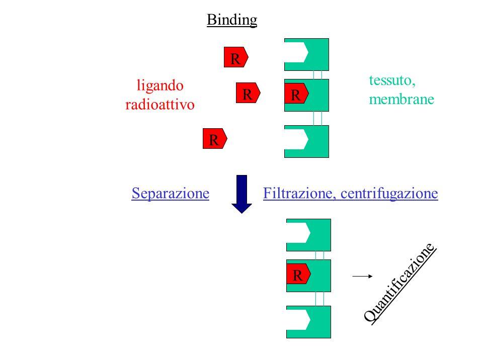 Binding R. tessuto, membrane. ligando. radioattivo. R. R. R. Separazione. Filtrazione, centrifugazione.