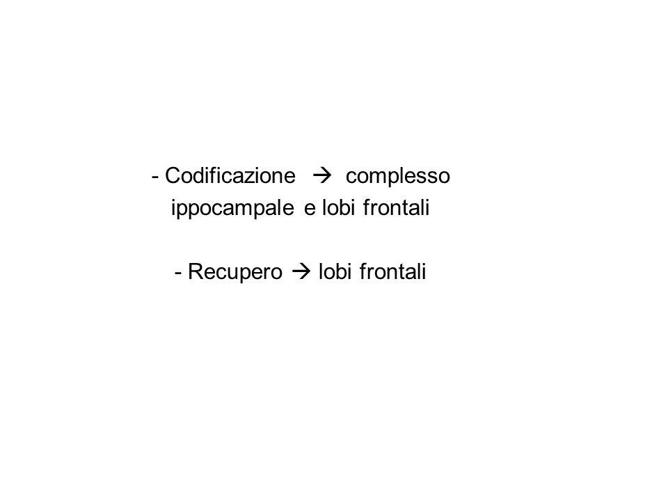 - Codificazione  complesso ippocampale e lobi frontali