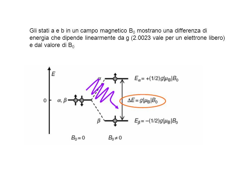 Gli stati a e b in un campo magnetico B0 mostrano una differenza di energia che dipende linearmente da g (2.0023 vale per un elettrone libero) e dal valore di B0