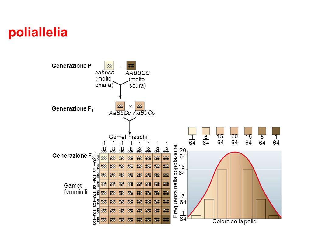 poliallelia L'ereditarietà poligenica crea un continuum di fenotipi.