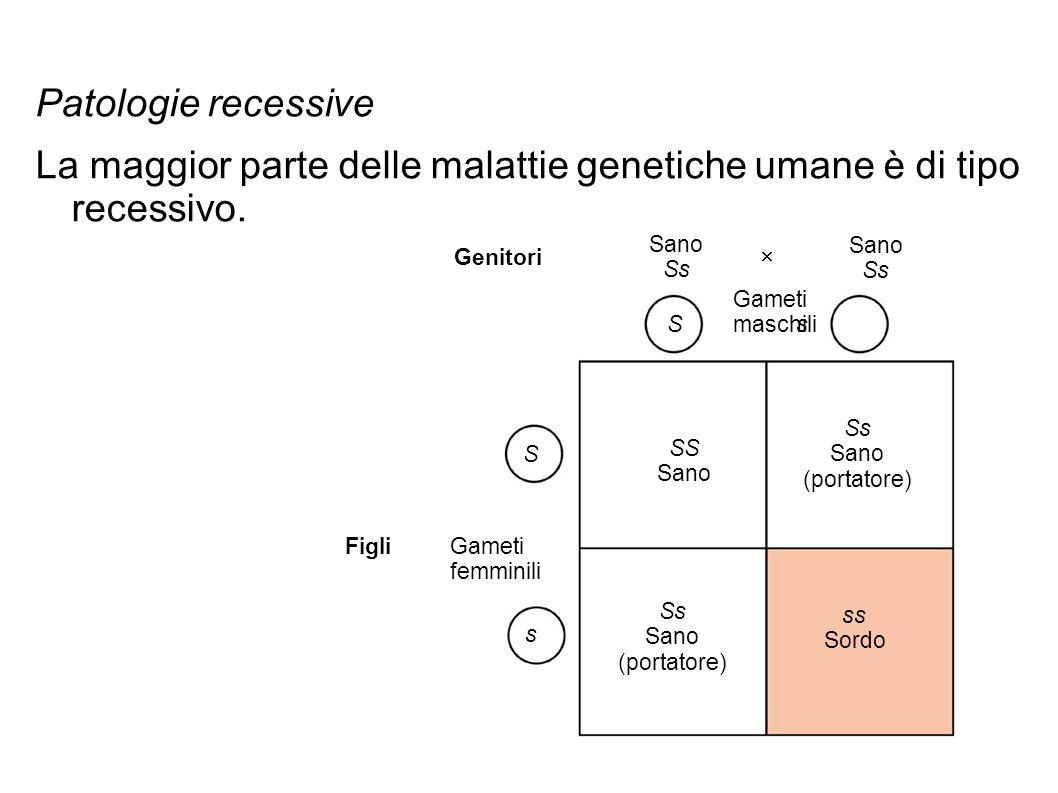 La maggior parte delle malattie genetiche umane è di tipo recessivo.