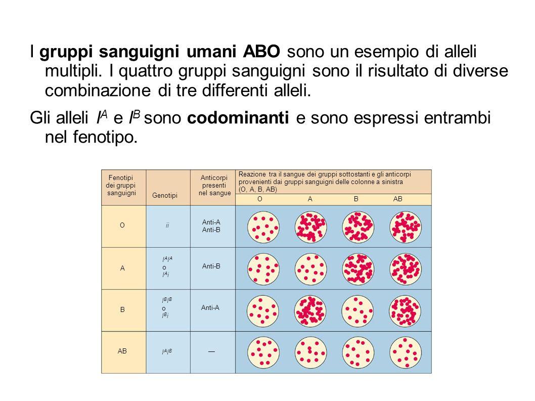 I gruppi sanguigni umani ABO sono un esempio di alleli multipli