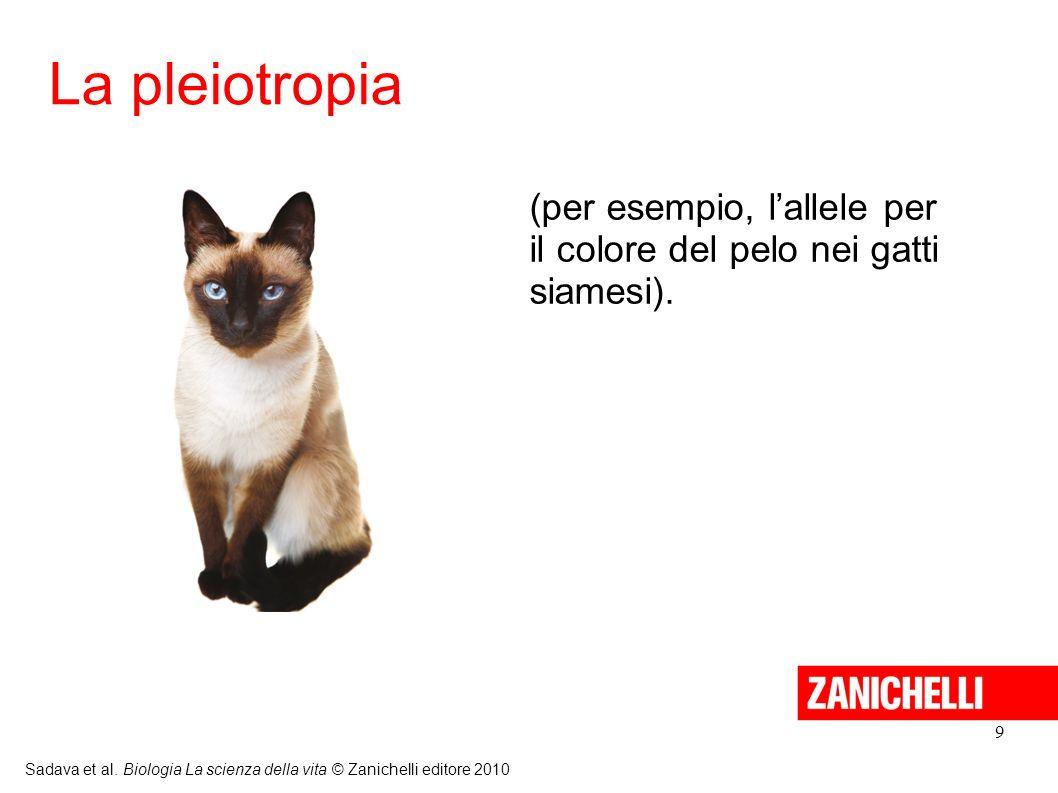 La pleiotropia (per esempio, l'allele per il colore del pelo nei gatti siamesi). 9.