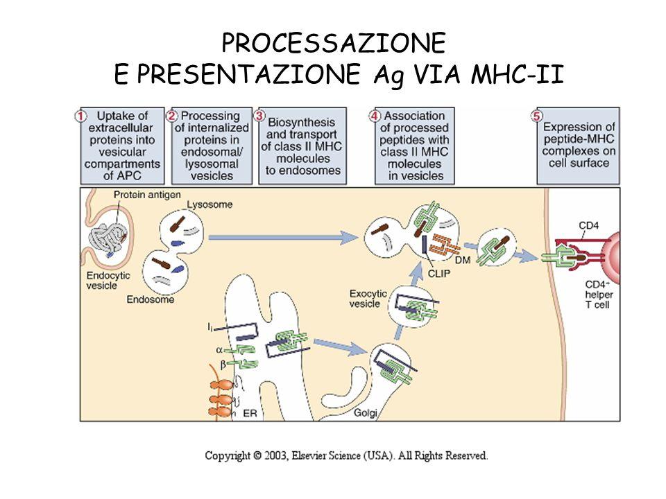 E PRESENTAZIONE Ag VIA MHC-II