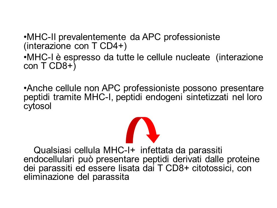 MHC-II prevalentemente da APC professioniste (interazione con T CD4+)