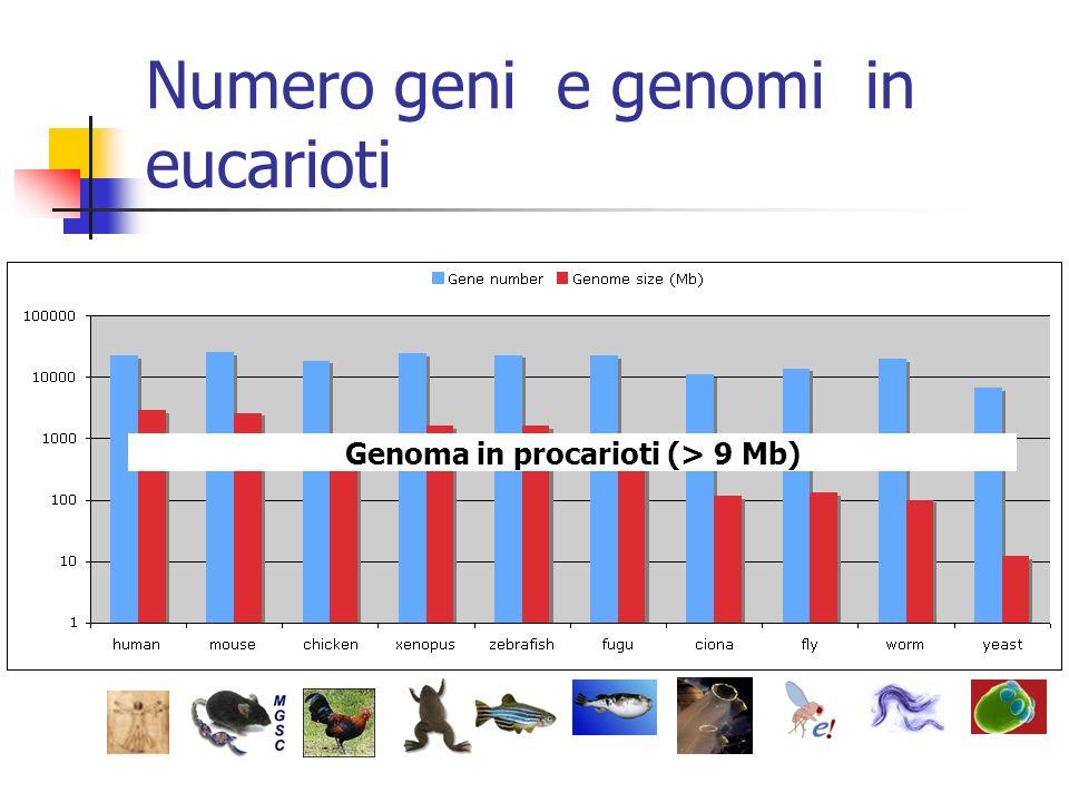 Numero geni e genomi in eucarioti