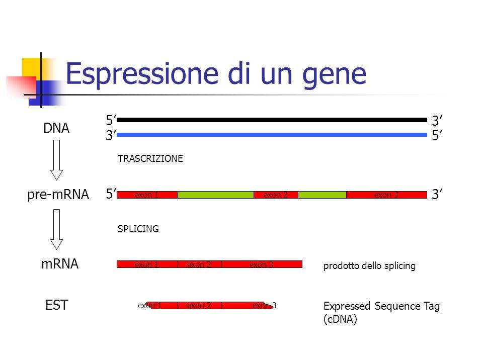 Espressione di un gene 5' 3' DNA 3' 5' 5' 3' pre-mRNA mRNA EST