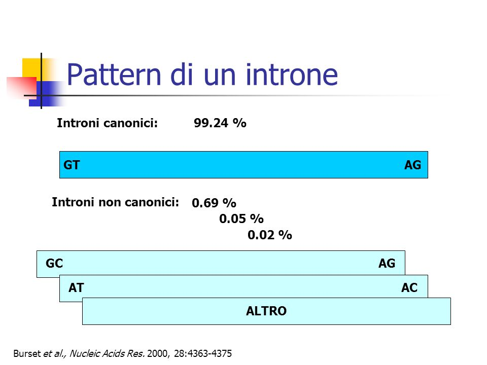 Pattern di un introne Introni canonici: 99.24 % GT AG