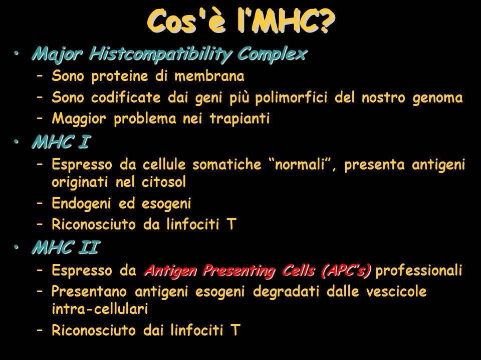 Cos è l'MHC Major Histcompatibility Complex MHC I MHC II