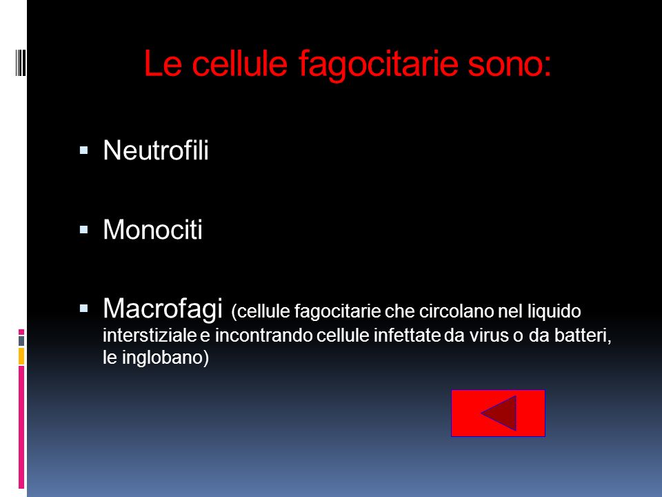 Le cellule fagocitarie sono: