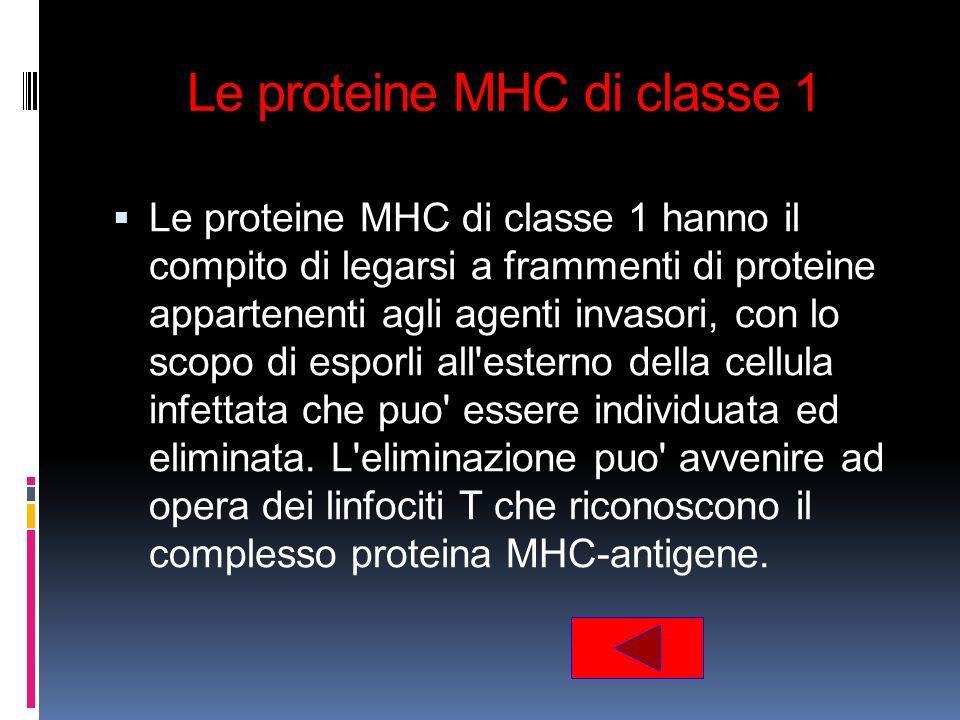 Le proteine MHC di classe 1
