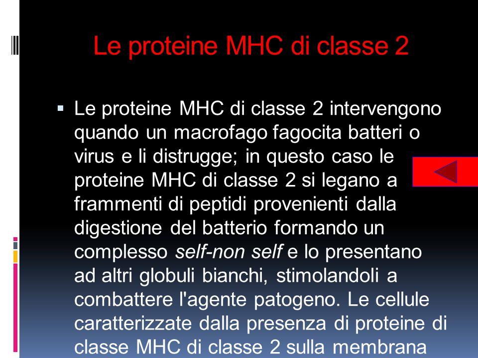 Le proteine MHC di classe 2