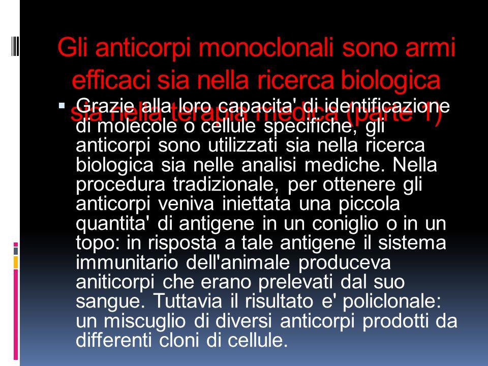 Gli anticorpi monoclonali sono armi efficaci sia nella ricerca biologica sia nella terapia medica (parte 1)