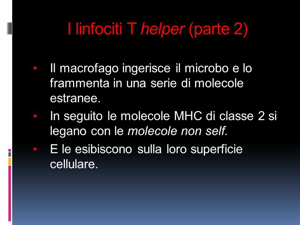 I linfociti T helper (parte 2)