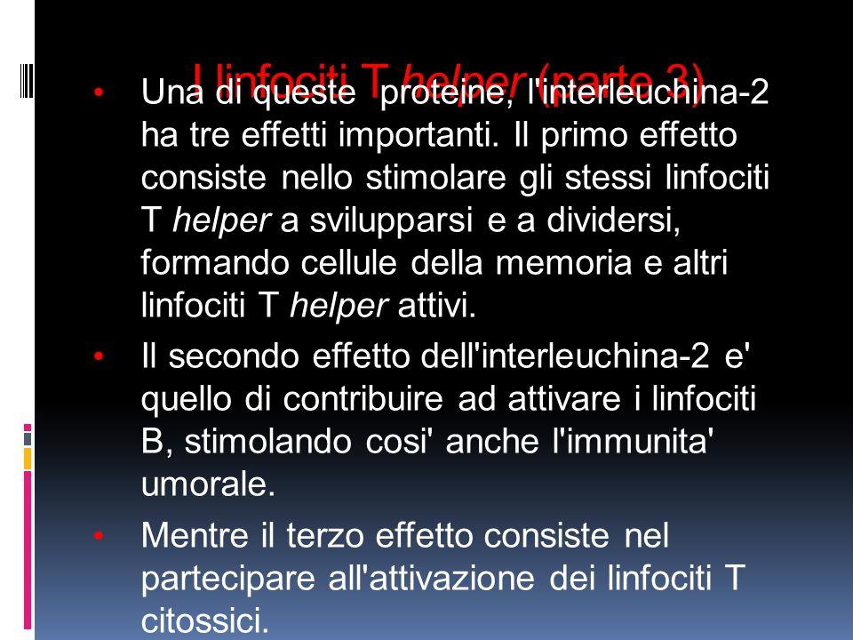 I linfociti T helper (parte 3)