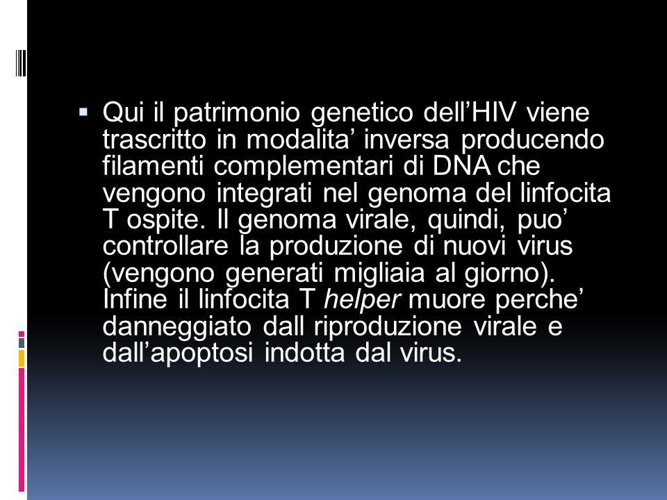 Qui il patrimonio genetico dell'HIV viene trascritto in modalita' inversa producendo filamenti complementari di DNA che vengono integrati nel genoma del linfocita T ospite.