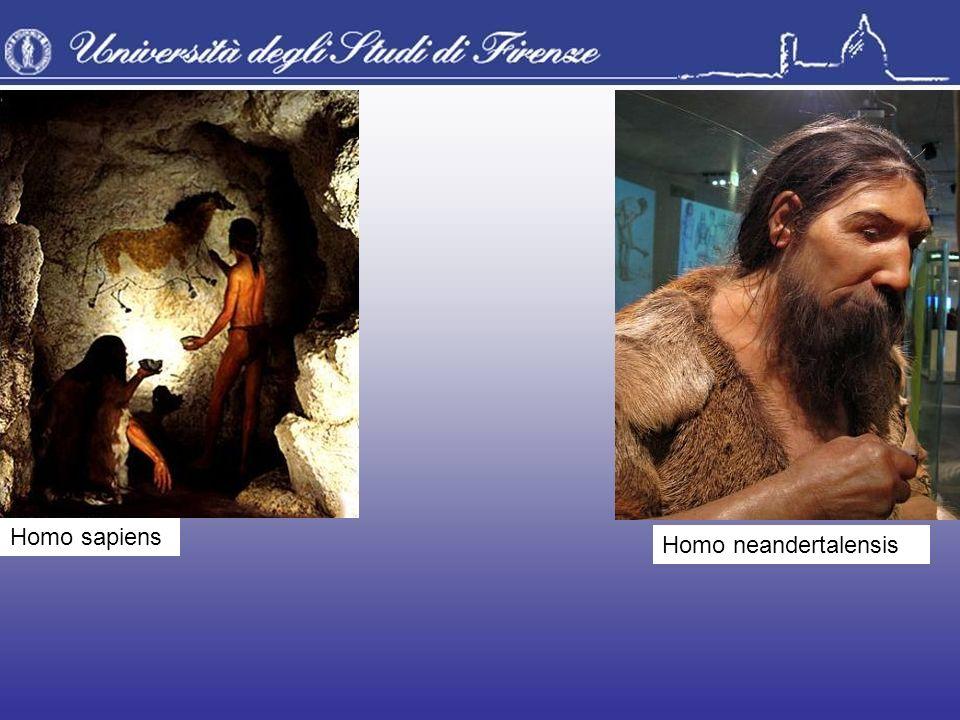 Homo sapiens Homo neandertalensis