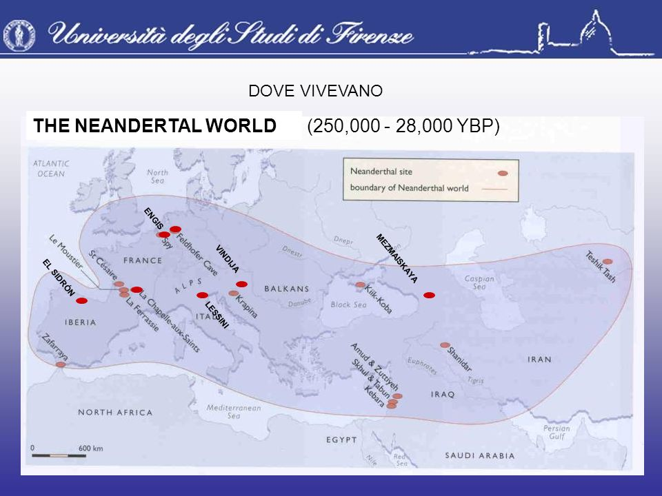 THE NEANDERTAL WORLD (250,000 - 28,000 YBP) DOVE VIVEVANO ENGIS