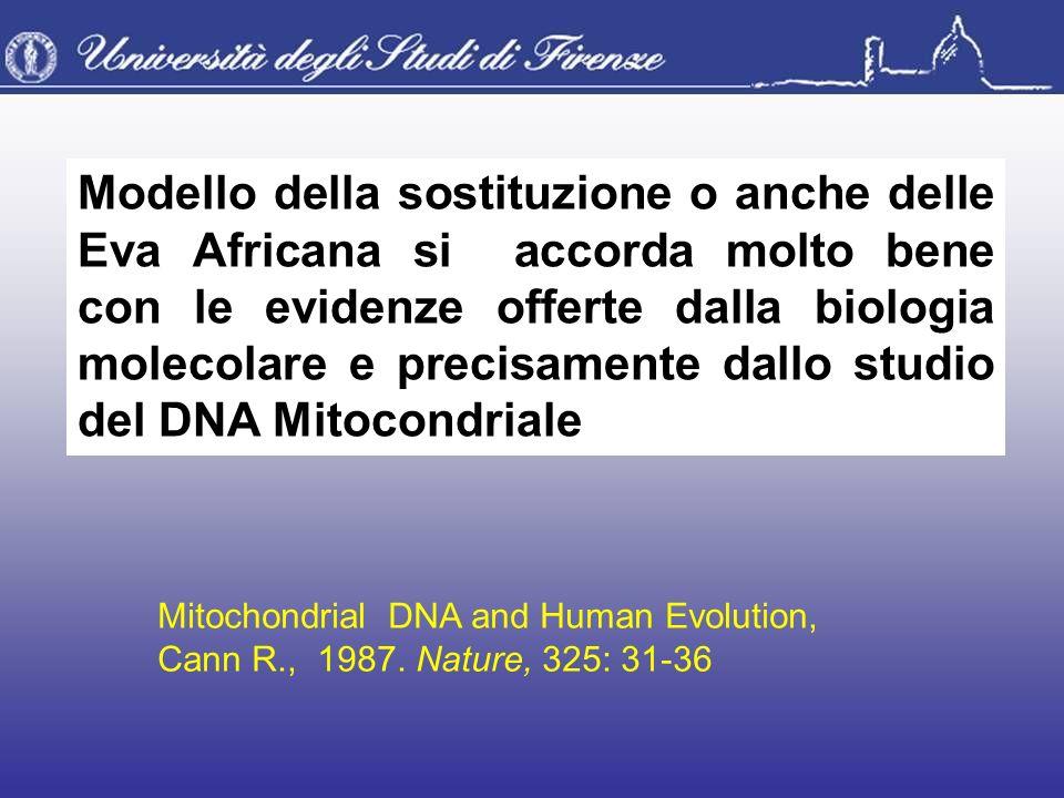 Modello della sostituzione o anche delle Eva Africana si accorda molto bene con le evidenze offerte dalla biologia molecolare e precisamente dallo studio del DNA Mitocondriale