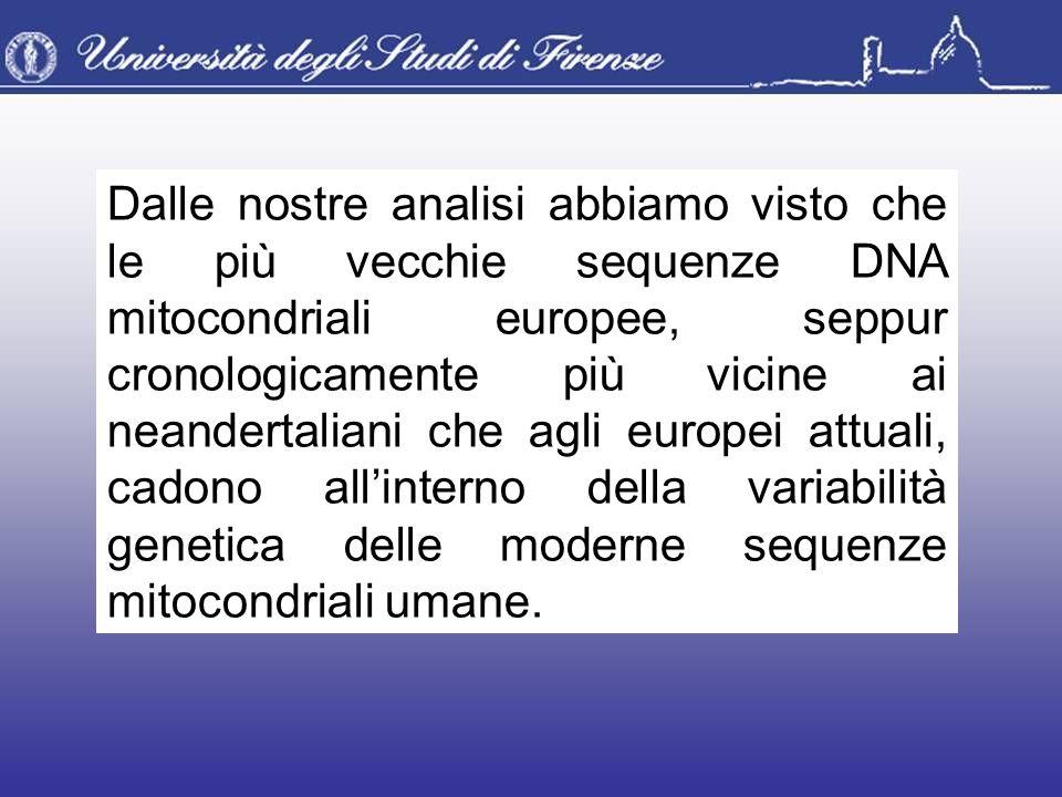Dalle nostre analisi abbiamo visto che le più vecchie sequenze DNA mitocondriali europee, seppur cronologicamente più vicine ai neandertaliani che agli europei attuali, cadono all'interno della variabilità genetica delle moderne sequenze mitocondriali umane.