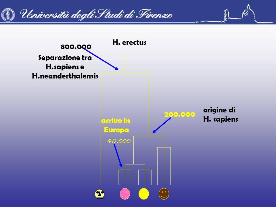 Separazione tra H.sapiens e. H.neanderthalensis. 800.000. H. erectus. 40.000. arrivo in. Europa.