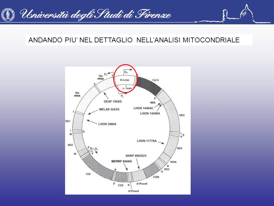 ANDANDO PIU' NEL DETTAGLIO NELL'ANALISI MITOCONDRIALE