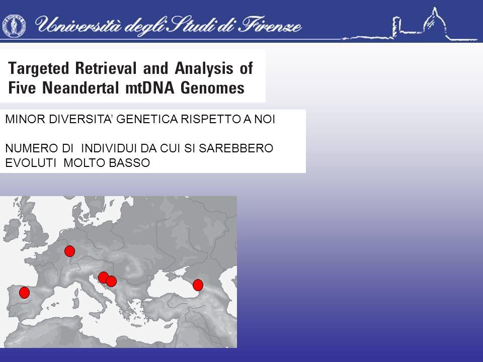 MINOR DIVERSITA' GENETICA RISPETTO A NOI