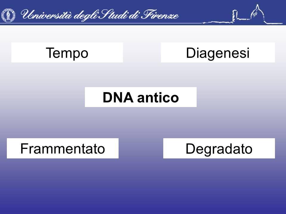 Tempo Diagenesi DNA antico Frammentato Degradato