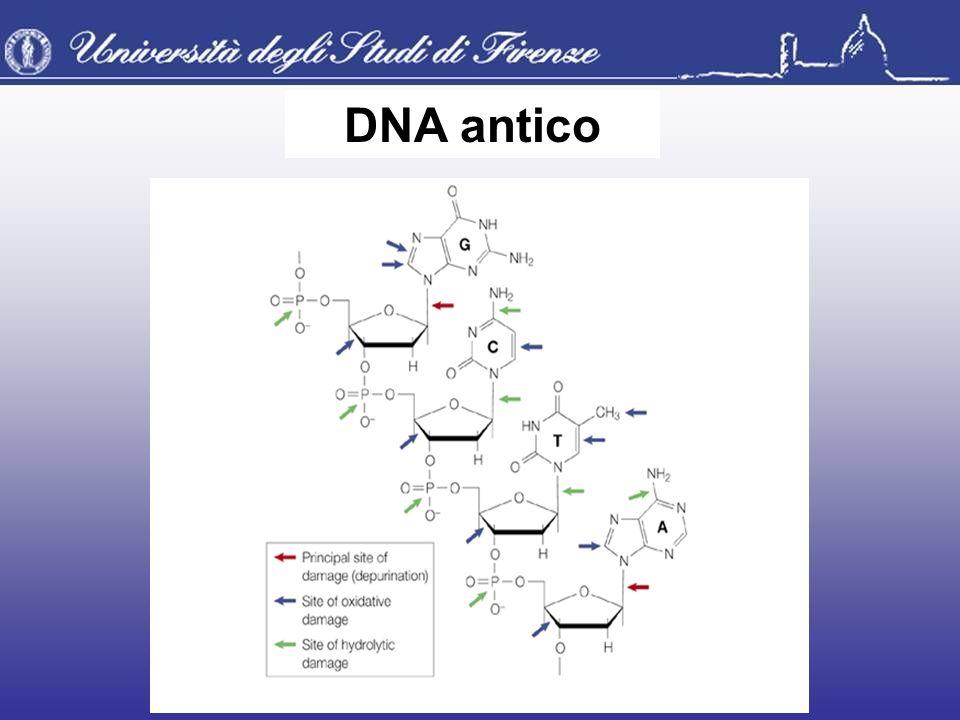 DNA antico