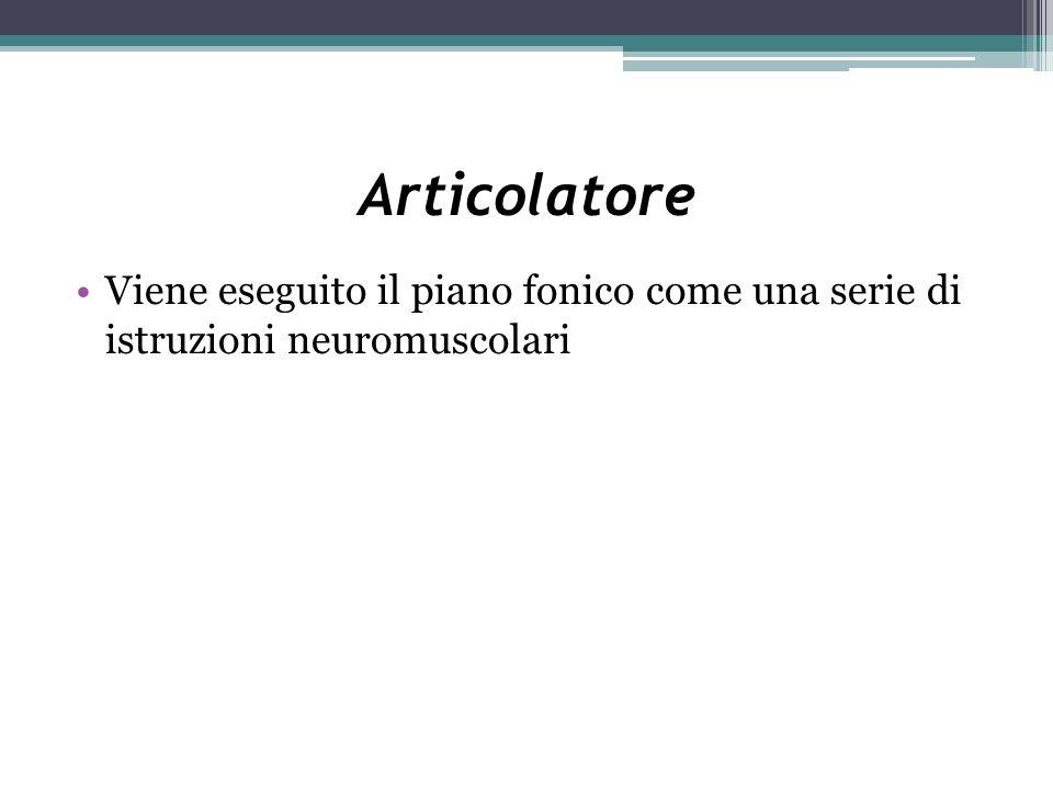 Articolatore Viene eseguito il piano fonico come una serie di istruzioni neuromuscolari