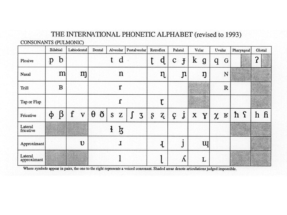 Consonanti IPA
