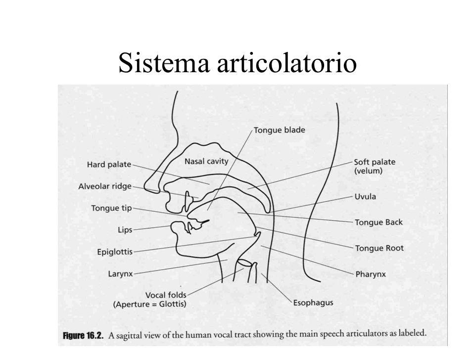 Sistema articolatorio