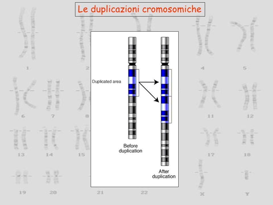 Le duplicazioni cromosomiche