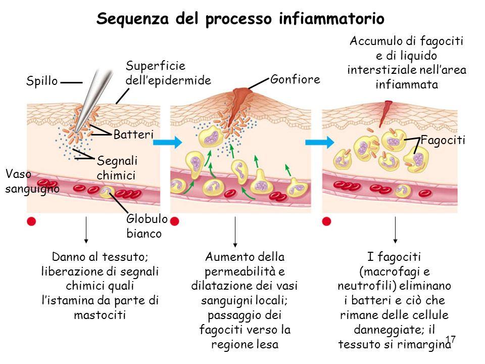 Sequenza del processo infiammatorio