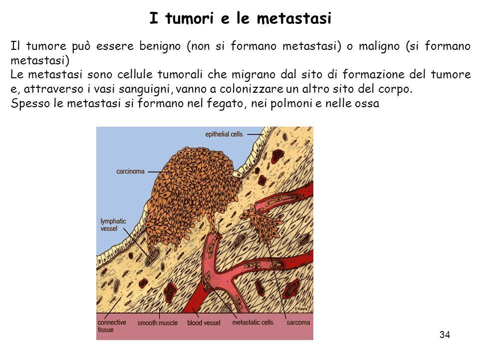 I tumori e le metastasi Il tumore può essere benigno (non si formano metastasi) o maligno (si formano metastasi)
