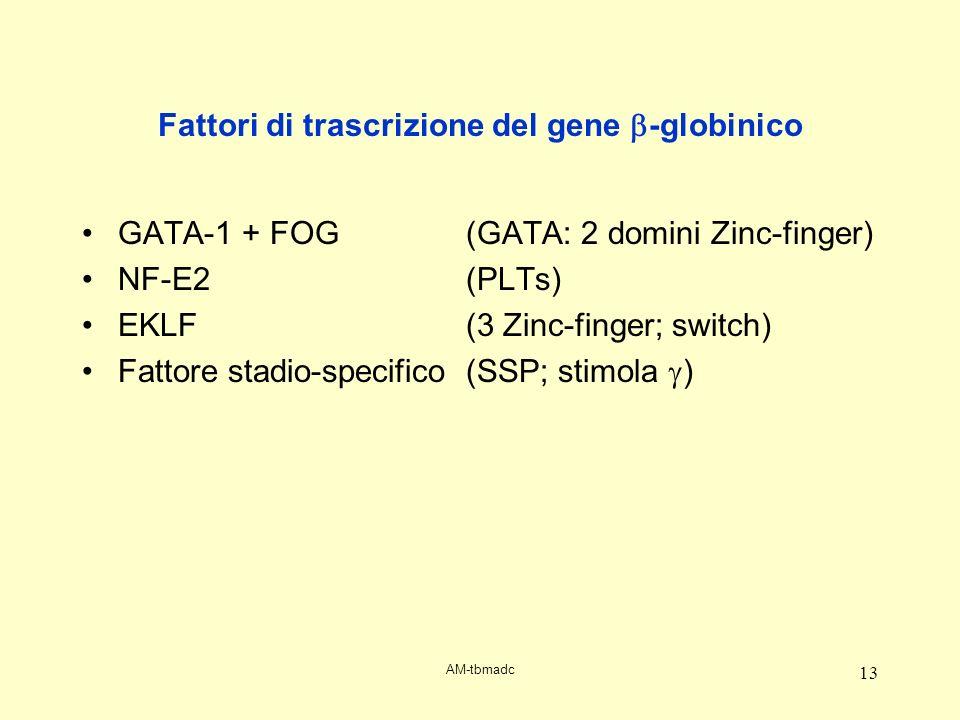 Fattori di trascrizione del gene b-globinico