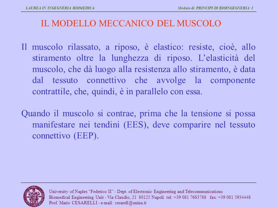 IL MODELLO MECCANICO DEL MUSCOLO