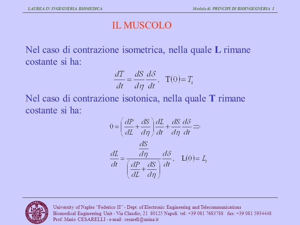 IL MUSCOLO Nel caso di contrazione isometrica, nella quale L rimane costante si ha: