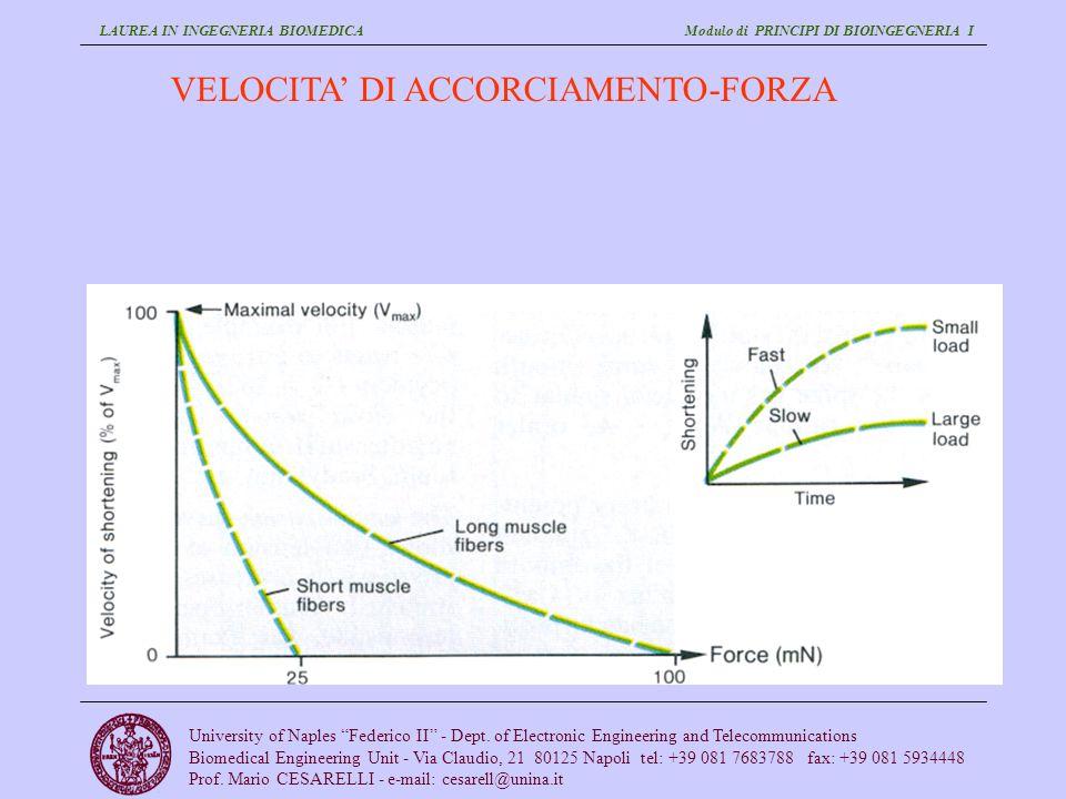 VELOCITA' DI ACCORCIAMENTO-FORZA