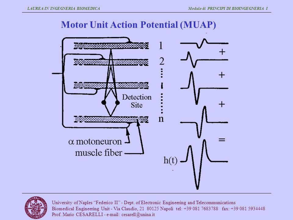 Motor Unit Action Potential (MUAP)