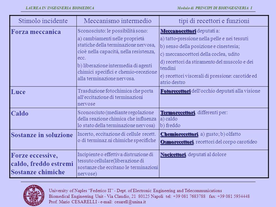 Meccanismo intermedio tipi di recettori e funzioni Forza meccanica