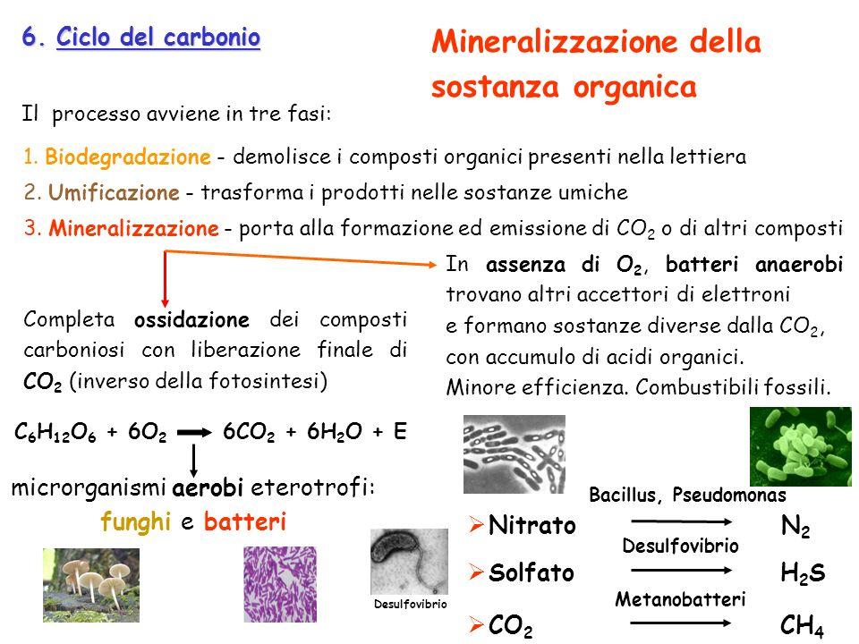 microrganismi aerobi eterotrofi: