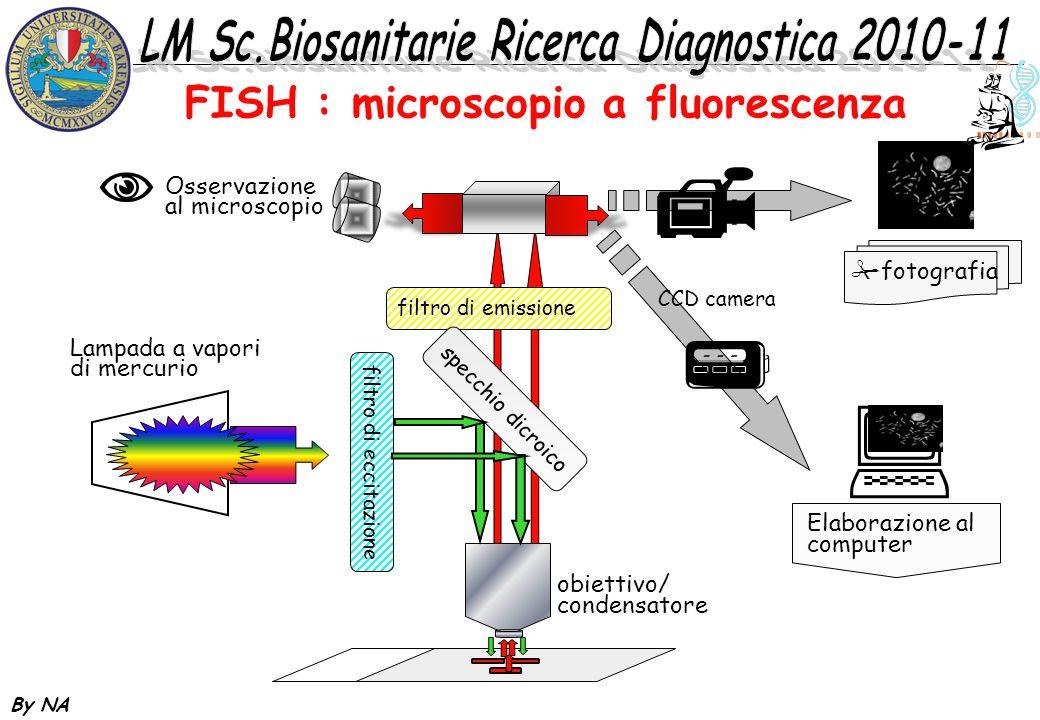 FISH : microscopio a fluorescenza