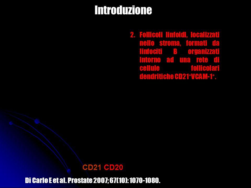 Introduzione H&E CD21/CD20 VCAM-1