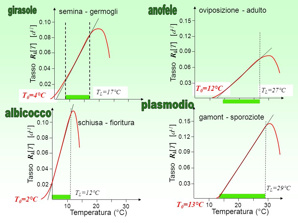 anofele oviposizione - adulto girasole semina - germogli